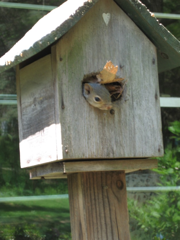 baby_squirrel_new_home_4