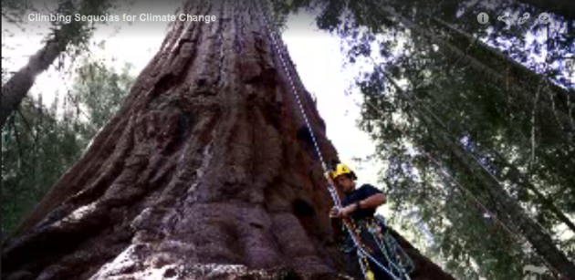 Climbing_Sequoias_for_Climate_change_3