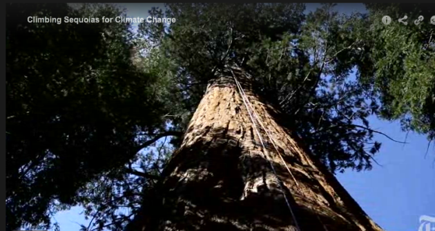 Climbing_Sequoias_for_Climate_change