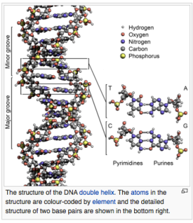 DNA, double helix