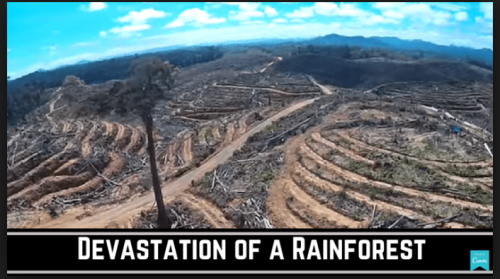 Devastation of Rainforest
