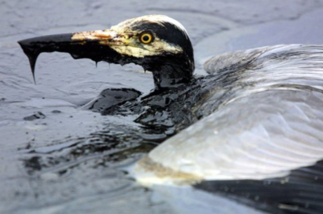 momgoesgreen.com:my-thoughts-on-the-gulf-oil-spill