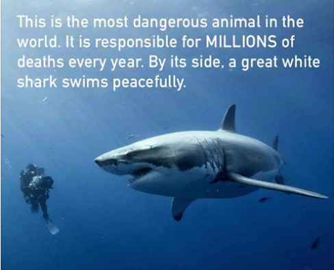 The most dangerous animal.