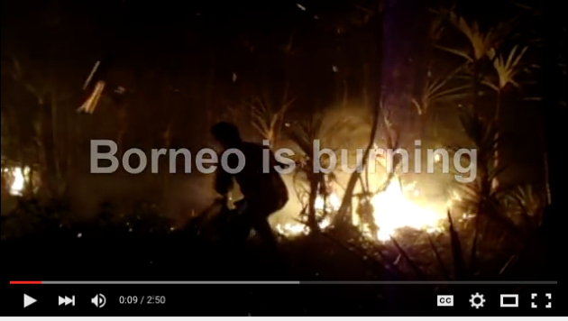 Borneo is burning video