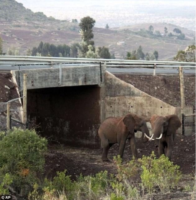 Elephant underpass, Kenya, amusingplanet