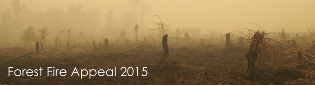 Rainforest Fire Appeal, Indonesia, help, 2015