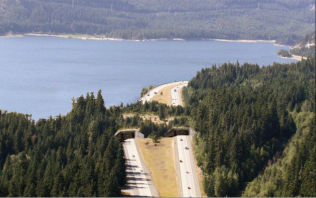 wildlife bridge, Keechelus Lake, Washington state, USA, twistedsifter