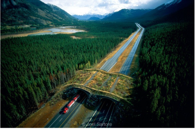 Wildlife Crossing, Banff National Park photo, Joel Sartore, amusingplanet