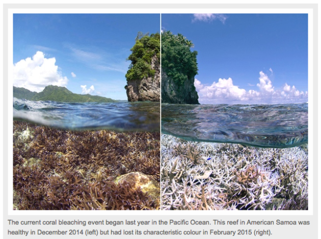 Nature article on worldwide coral bleaching