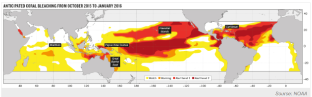 NOAA Anticipated coral bleaching between 2015 and 2016