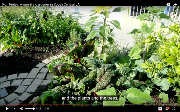 Ron Finley, Guerrilla Gardener, artist's palette, plants, trees