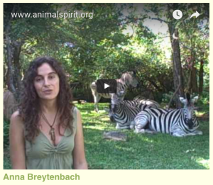 The Animal Communicator, animalspirit