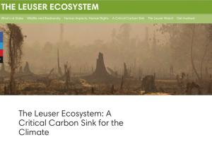 The Leuser Ecosystem, Rainforest Action Network