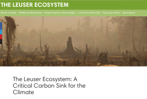 The Leuser Ecosystem, Rainforest Action Network