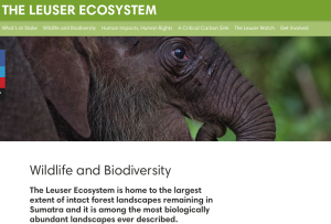 The Leuser Ecosystem, Wildlife and Biodiversity, Rainforest Action Network