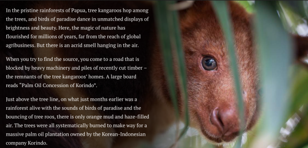 Tree Kangaroos and Birds of Paradise in Papua Losing their habitat to Palm Oil Clearcutting