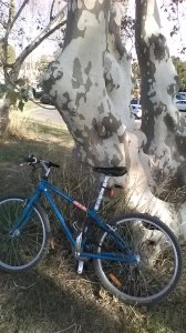 trees on bicycle ride to sea