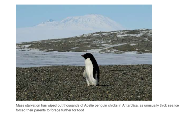 Adelie penguins rely on Krill as their diet, Krill fisheries diminish their food supply