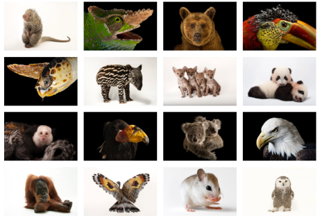 Joel Sartore, Photo Ark, photographing, documenting species