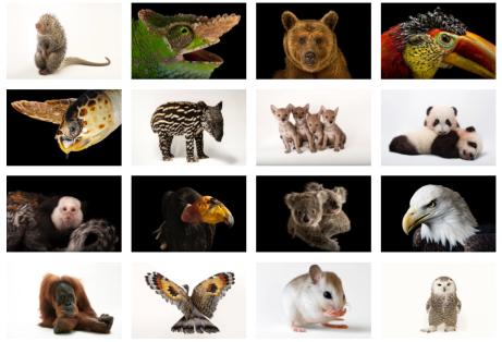 Joel Sartore, Photo Ark, photographing, documenting species