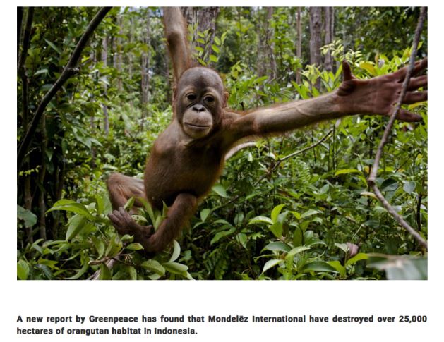 Orangutan habitat destoryed by Chocolate makers Mondelez, Cadbury