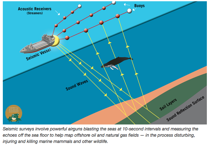 Seismic blasting diagram, biologicaldiversity
