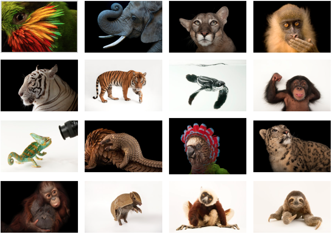 Joel Sartore, photographer, has created this Gallery, The Photo Ark, documenting all species of bird, amphibian and animal.