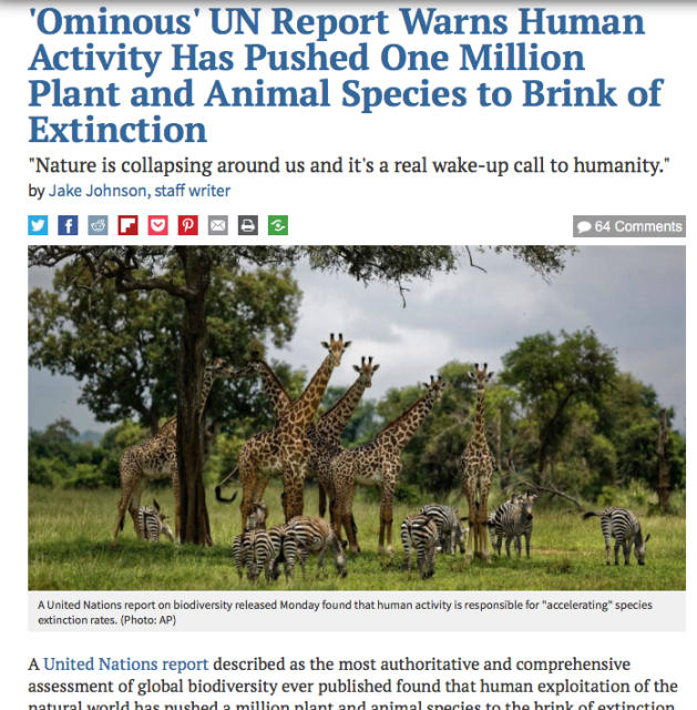 UN Report, Warns Human Activity Has Pushed One Million Plant and Animal Species, Brink of Extinction